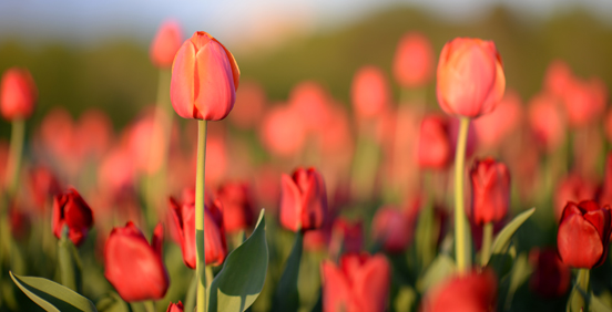 Tips to Plan Your Social Spring